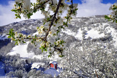 Uma vila pequena nas inclinações da montanha de Shar, cobertas com a neve de abril Imagem de Stock