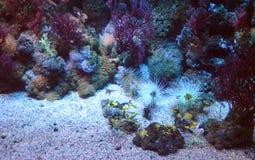 Uma visita no famoso o aquário de Genoa em di Genebra de Acquario do italiano, o aquário o maior em Itália e entre o i o maior Fotografia de Stock Royalty Free