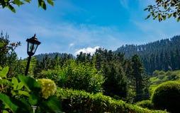 Uma vista bonita da floresta fotografia de stock