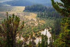 Uma vista cênico da floresta verde luxúria imagens de stock