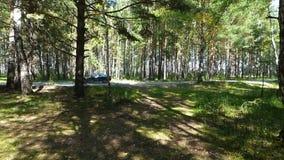 Uma vista da floresta à estrada com alguns carros moventes filme
