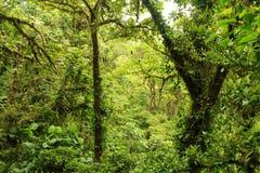 Uma vista da floresta úmida Imagens de Stock