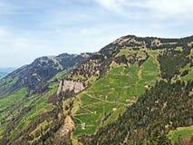 Uma vista das florestas e dos pastos con?feros nas inclina??es da montanha de Rigi imagem de stock