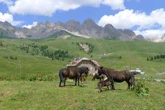 Uma vista de Dolomiti Fotos de Stock
