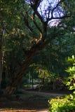 Uma vista de um parque verde Fotografia de Stock Royalty Free