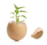 Uma vista de uma planta verde em casca de ovo rachada Fotos de Stock Royalty Free
