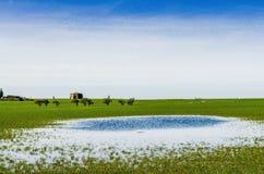 Uma vista distante da abadia de Cockersand com campos flodded Fotos de Stock Royalty Free