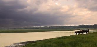 Uma vista do lakeshore antes do temporal no dia do outono Imagem de Stock