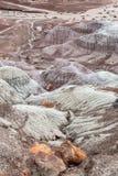 Uma vista em Forest National Park hirto de medo, o Arizona foto de stock royalty free