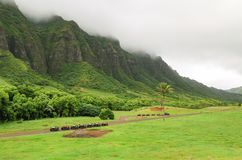Uma vista magnífica do rancho de Kualoa imagem de stock