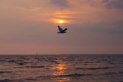 Uma vista a mais bonita de uma única gaivota tailandesa, voando em um por do sol dourado pitoresco da noite, sobre um delta impre Imagens de Stock