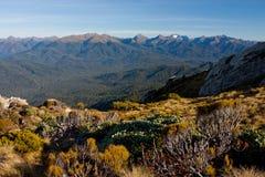 Uma vista na floresta e nas montanhas da caminhada de Humpridge em Fiordland/Southland na ilha sul em Nova Zelândia fotos de stock royalty free