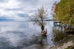 Uma vista no lago Genebra de Preverenges, Suíça foto de stock