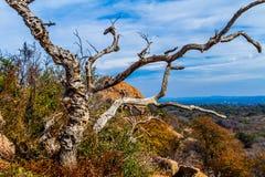 Uma vista ocidental selvagem bonita com uma árvore inoperante Gnarly, uma ideia do pico de Turquia na rocha encantado, Texas. fotos de stock royalty free
