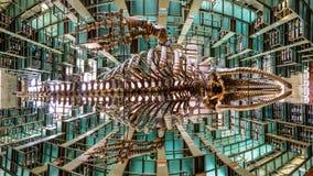 Uma vista panorâmica de um esqueleto da baleia branca que pendura do teto do Biblioteca Vasconcelos em Cidade do México foto de stock