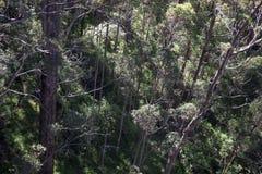 Uma vista para baixo de uma ponte da caminhada da parte superior da árvore no vale do Giants, Walpole Imagem de Stock