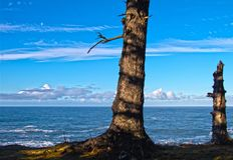 Uma vista para o mar das árvores da lua fotografia de stock