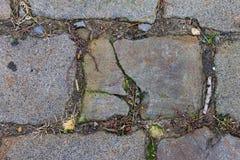Uma vista próxima em um tijolo de uma estrada velha do tijolo Tijolo, grama verde, musgo Imagens de Stock Royalty Free