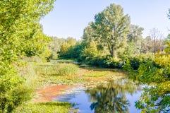 Rio quieto no parque Imagens de Stock