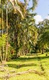 Uma vista típica em Costa Rica foto de stock royalty free