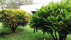 Uma vista verde Imagem de Stock Royalty Free