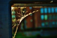 Uma Web de aranha Fotos de Stock Royalty Free