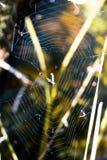 Uma Web entre a grama Imagens de Stock Royalty Free