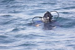 Fully equipped diver in the sea stock images