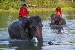 Umano - elefante Fotografie Stock