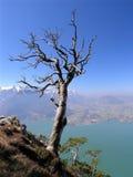 umarłe drzewo Zdjęcie Stock