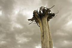 umarłe drzewo Zdjęcia Stock