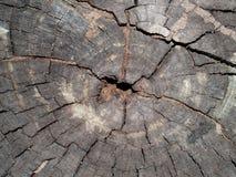 umarłe drzewo szczekać Obrazy Stock