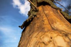 umarłe drzewo Obraz Royalty Free