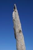 umarłe drzewo obraz stock