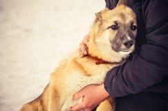 Umarmen des Hundeschäfers Puppy und -frau im Freien Stockfoto