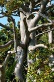 Umarmung der Zweige Stockbild