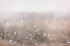 Neve de março Fotos de Stock Royalty Free