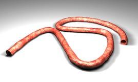 Umbilical cord Stock Photo