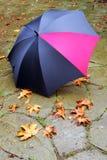 Umbrella Stock Photography