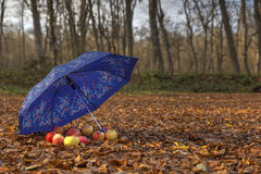 Umbrella and apples in the woods Stock Photo