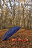 Umbrella and apples in the woods Royalty Free Stock Images