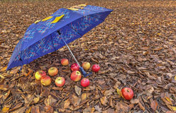 Umbrella and apples in the woods Royalty Free Stock Photography
