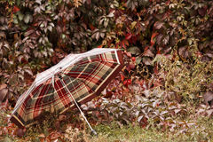 Umbrella in the autumn. Among the multi-colored leaves Royalty Free Stock Images