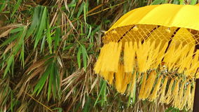 Umbrella, bamboo and wind. A background view of an asian umbrella and bamboo leaves on the wind stock video footage