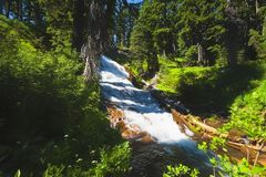 Umbrella Falls Mt. Hood National Forest. Cascading waters of Umbrella Falls cuts through evergreen forest in Mt. Hood National Forest in Oregon Royalty Free Stock Images