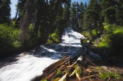Umbrella Falls Mt. Hood National Forest. Looking up at the cascading waters of Umbrella Falls in Mt. Hood National Forest in Oregon Royalty Free Stock Image