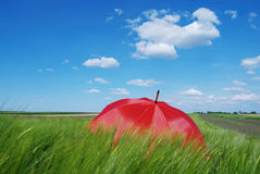 Umbrella in field Royalty Free Stock Photos