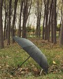 An umbrella in the forest stock image