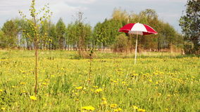 Umbrella on meadow. Abstract background of garden umbrella standing in wind on nature meadow stock video footage