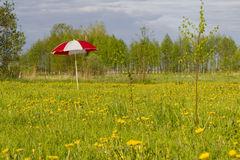 Umbrella in meadow Royalty Free Stock Image